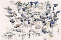 Lapwing Group