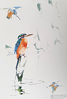 Kingfisher Courtship