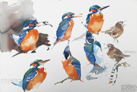Kingfisher shapes and neighbouring Wren