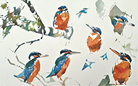 Kingfishers and Alder