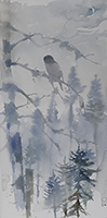 Roosting female Hawk Owl, mist enveloping Taiga forest